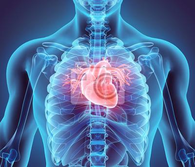 Fototapeta 3D ilustrace srdce, lékařské koncept.