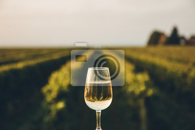 Fototapeta A fresh chilled glass of ice wine overlooking a Canadian vineyard during a Summer sunset