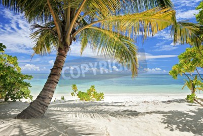Fototapeta A scene of palm trees and sandy beach in Maldives island
