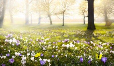 Fototapeta abstract sunny beautiful Spring background