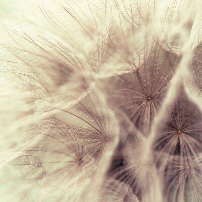 Fototapeta Abstrakt closeup louce kořene