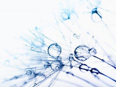 Fototapeta Abstraktní makro fotografie semena rostlin s vodní kapky.