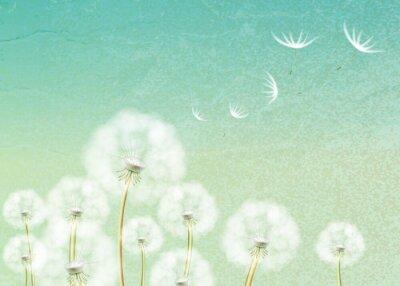 Fototapeta Abstraktní pozadí s kyticí pampelišky