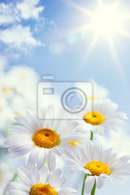 abstraktní vintage květinové léto pozadí