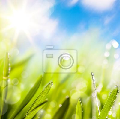 abstrakty z přírodního jarní zelené pozadí