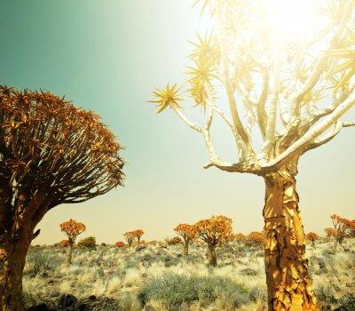 Fototapeta Africké krajiny