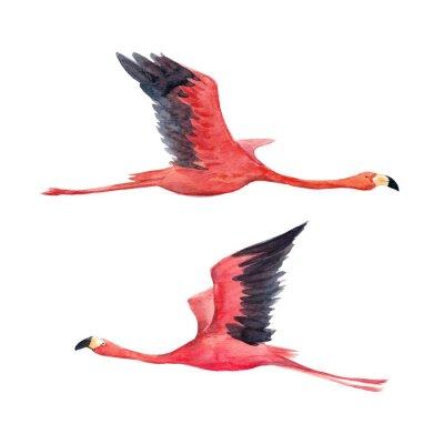 Fototapeta Akvarel flamingo ilustrace