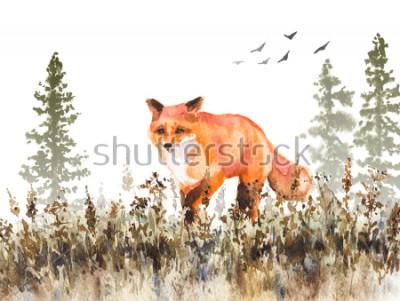 Fototapeta Akvarel malovat. Ručně kreslené zvířecí ilustrace. Červená líška chůze na vybledlé louce. Podzimní scéna s pohybem divokých dravců, každý v mlze a sušená tráva.