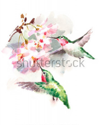 Fototapeta Akvarel ptáry Kolibříky létající kolem květů Květiny Ručně kreslenou letní zahrádka Ilustrace izolovaných na bílém pozadí