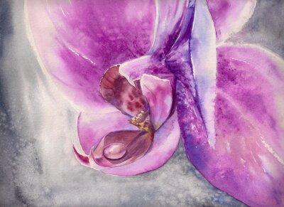 Fototapeta Akvarel těžké dýchání růžové květ orchideje s malou kapkou vody.