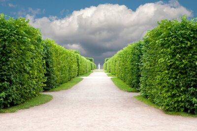 Fototapeta alej v parku s přesně tvarovanými stromy