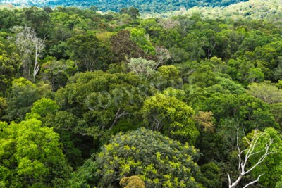 Fototapeta Amazonského pralesa v Brazílii