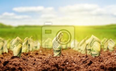 Fototapeta Americké dolary rostou ze země