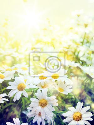 Art Field of daisies, sky and sun