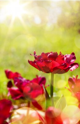 Fototapeta art jarní květinové pozadí