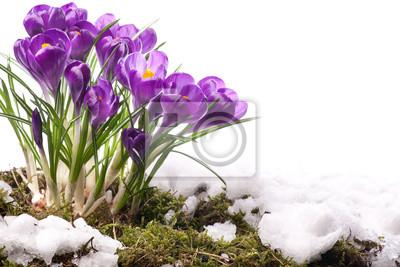 art Krásné jarní květiny