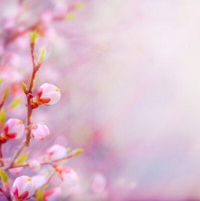 art Krásné jarní kvetoucí strom na obloze na pozadí