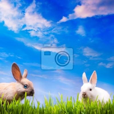 art pár malé velikonoční králík na zelené trávě