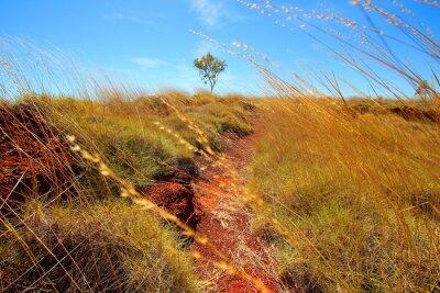 Fototapeta australském vnitrozemí