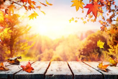 Fototapeta Autumn Table With Red And Yellow Leaves And Forest Background
