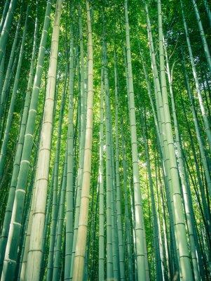 Fototapeta Bamboo cesta