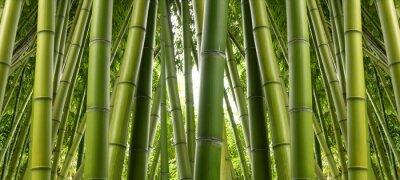 Fototapeta Bamboo Jungle