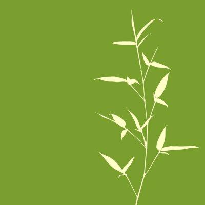 Fototapeta Bamboo silueta na zeleném pozadí