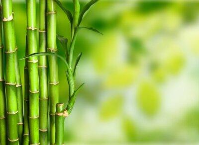 Fototapeta Bambus.
