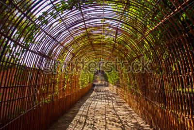 Fototapeta Bambus křivka dřevěný tunel v parku
