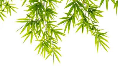 Fototapeta bambus listy izolovaných na bílém pozadí