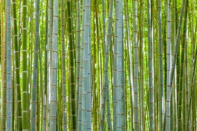 Fototapeta bambus pozadí v přírodě na den