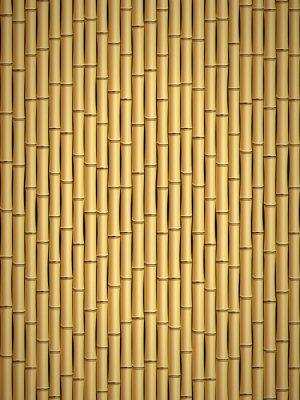 Fototapeta bambus vzor