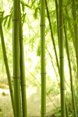 Fototapeta Bambushalme 2