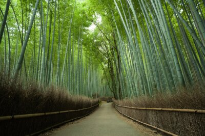 Fototapeta Bambusové lesní cesta, Kyoto, Japonsko