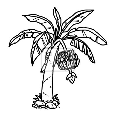 Bananovy Strom Kresleny Vektor A Ilustrace Cerne A Bile Rucne