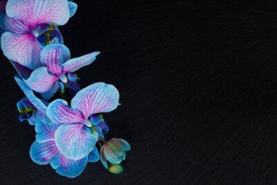 Fototapeta Banda fialové orchideje