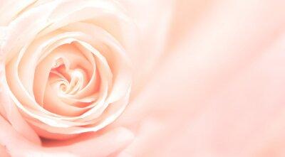 Fototapeta Banner s růžové růže