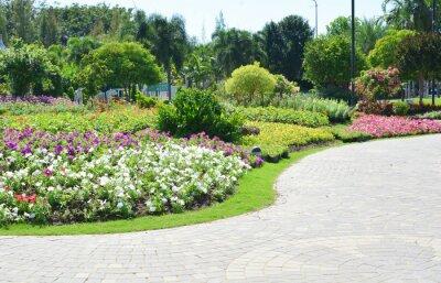 Fototapeta Barevné květiny v zahradě