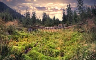 Fototapeta Barevné letní slunce v kouzelném lese s obrovským kobercem zeleného mechu