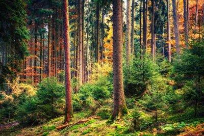 Fototapeta Barevné podzimní les v Německu