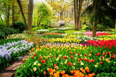 Fototapeta Barevné tulipány Květinové záhony a cesta v jarní formální zahradě, retro tónovaný