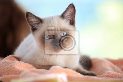 Mladá barevná kočička