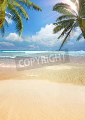 Fototapeta Beach palm