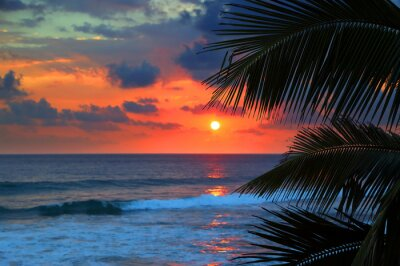 Fototapeta beautiful sea sunset and palm leaves