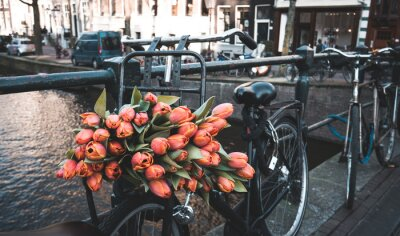 Fototapeta Bike s tulipány