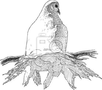 Bila Holubice Na Vetvi Fototapeta Fototapety Backview Ornitologie
