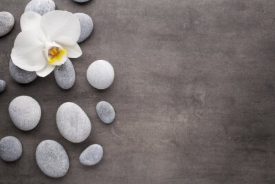 Fototapeta Bílá orchidej a lázeňské kameny na šedém pozadí.