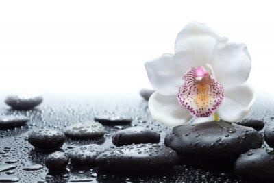 Fototapeta bílá orchidej a vlhké černé kameny