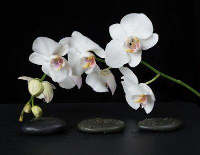 Fototapeta Bílá orchidej na černém pozadí