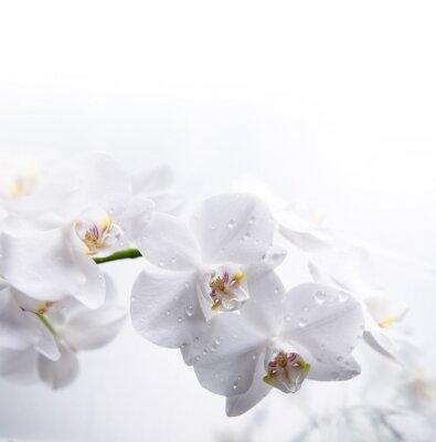 bílá orchidej na vodě